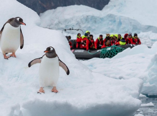 At every opportunity, our Expedition Team will take you ice-cruising and bring you ashore for landings to get close to these extraordinary areas. Like meeting the penguins in Neko Harbour, Antarctica.