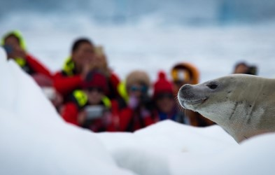 In Antarctica, we aim to show you the incredible diversity of landscapes and rich wildlife in this pristine wilderness.