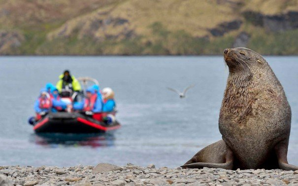 Guests in explorer boats getting close to an Antarctic Fur Seal
