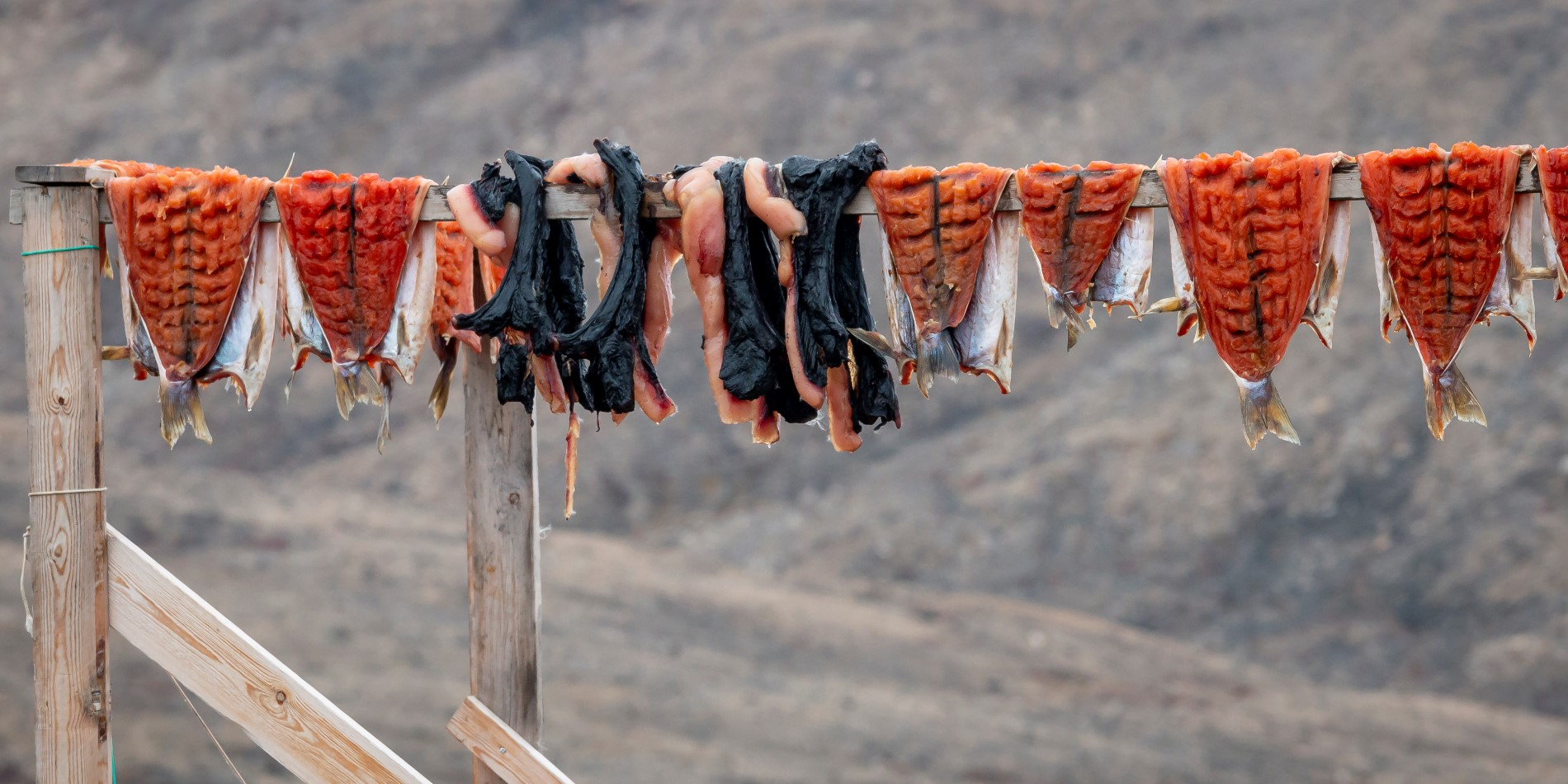 Fish hung outside to dry