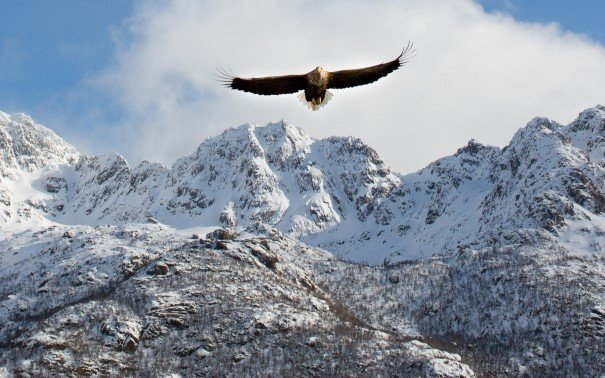 A bird flying over a snow covered mountain