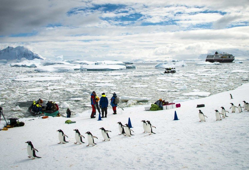 Meeting the penguins of Antarctica