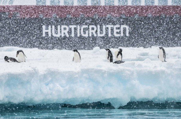 Adelie penguins basking in the snow outside Brown Bluff, Antarctica