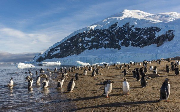 Chinstrap penguins hanging out on the beach in Neko Harbour, Antarctica