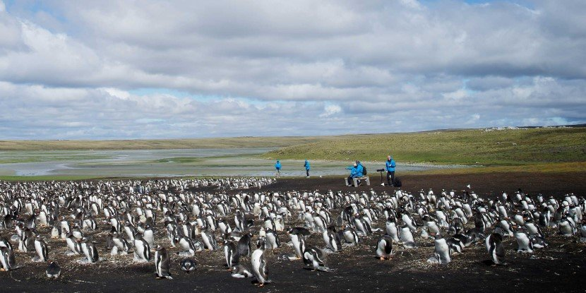 Visit the penguins at Bluff Cove on the Falkland Islands.