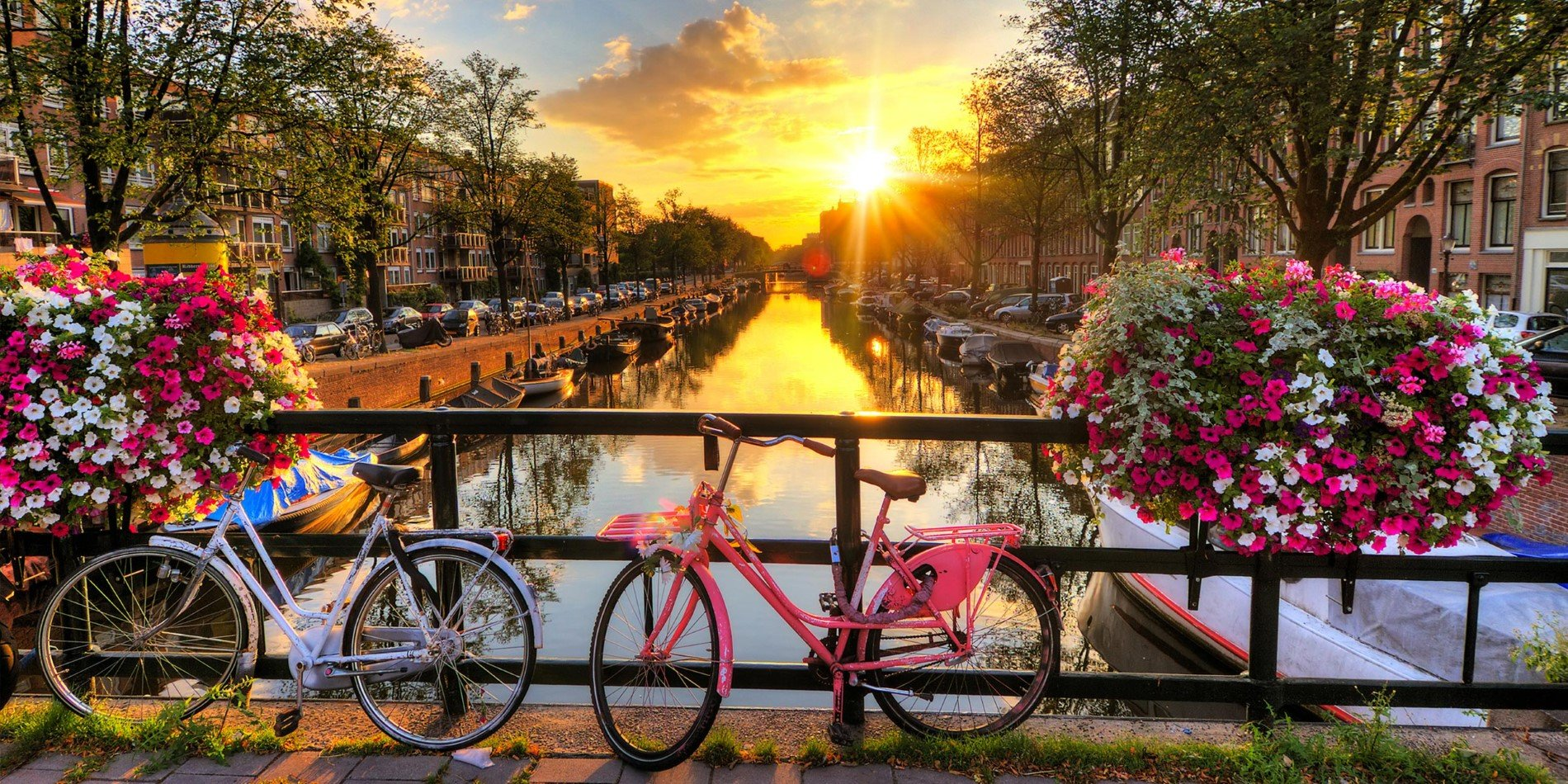 Sunrise over Amsterdam with flowers and cycle on a canal bridge.