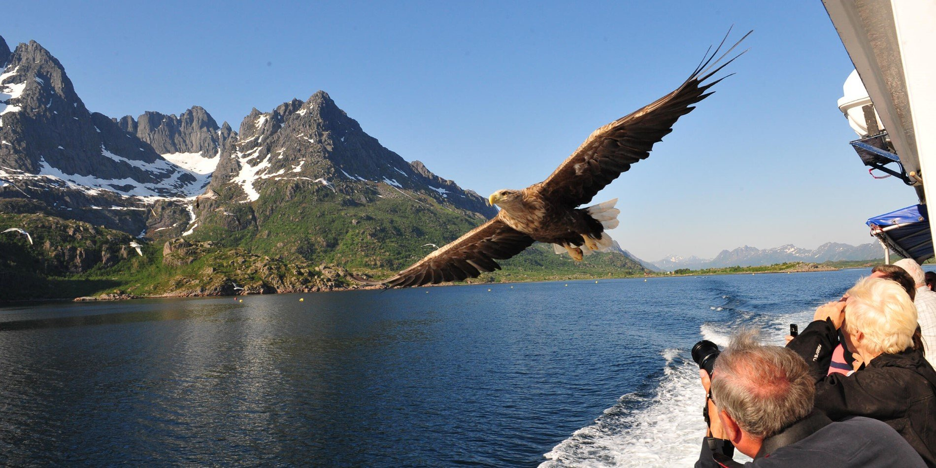 Sea eagle safari