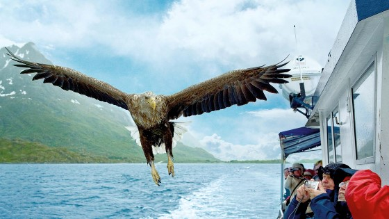 The wingspan of the white-tailed sea eagle can reach up to 2.7 m