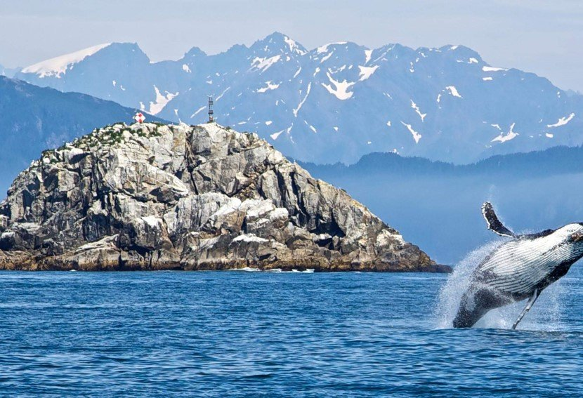 Alaska is a paradise for wildlife. Whales feed in Alaskan waters. Bears roam the shores or catch salmon in rivers. Sea lions group on rocky outcrops, eagles soar from tree to tree, and seals float on icebergs deep in the fjords.