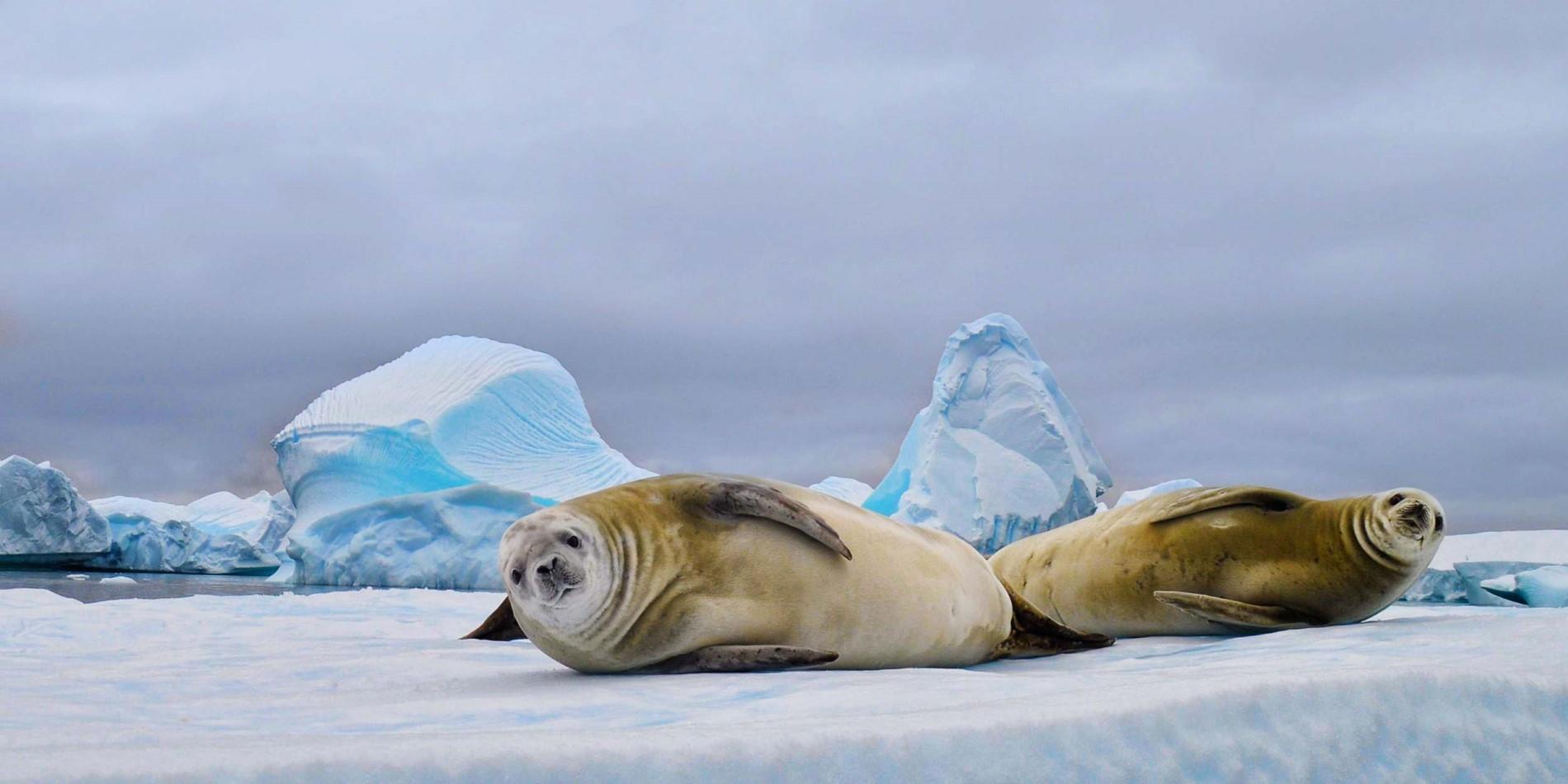 The Animals of Antarctica | Hurtigruten