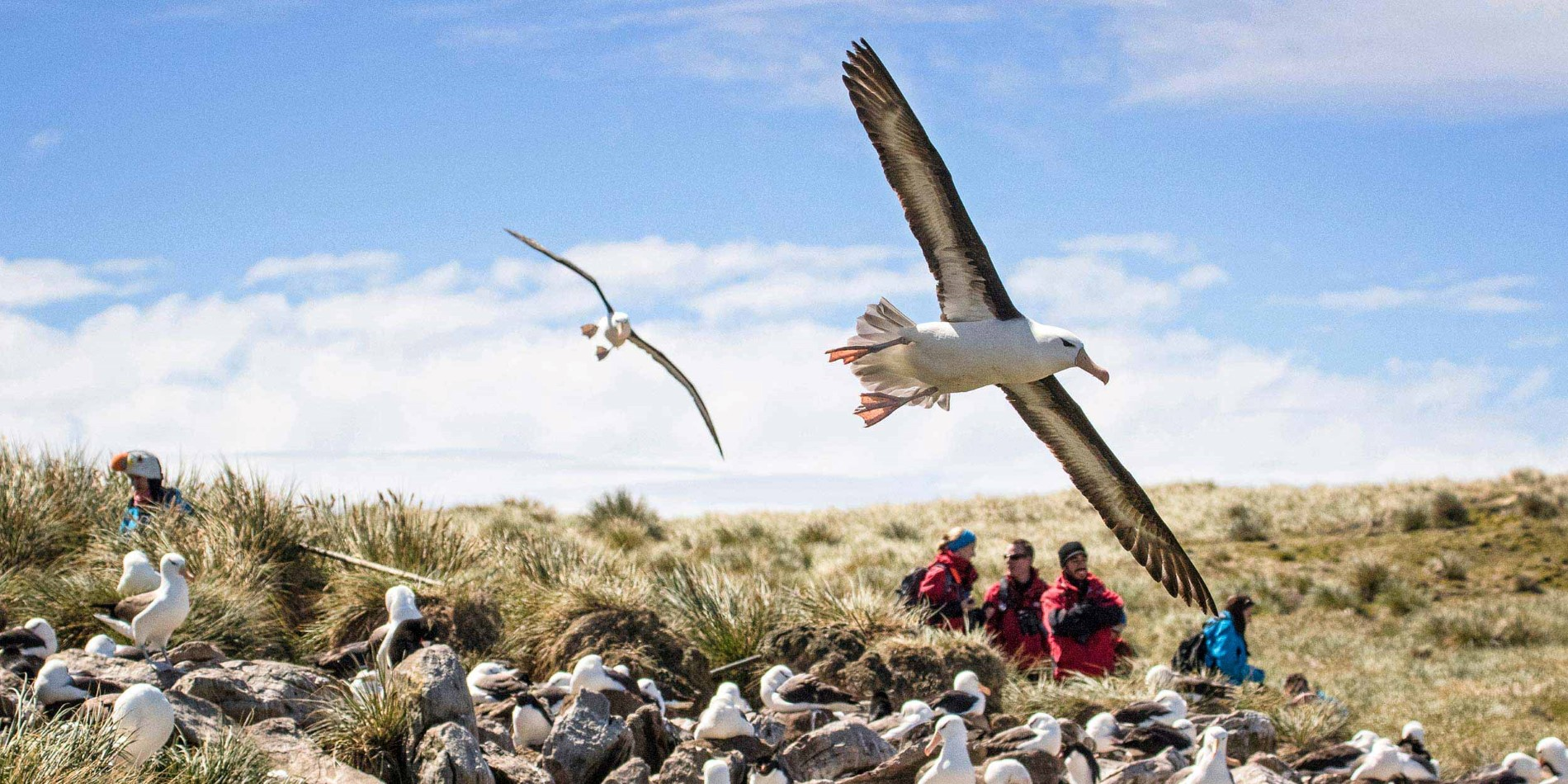 Bird watching at the Falkland Islands