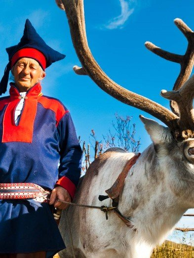 Reindeers are essential for Sami culture and life
